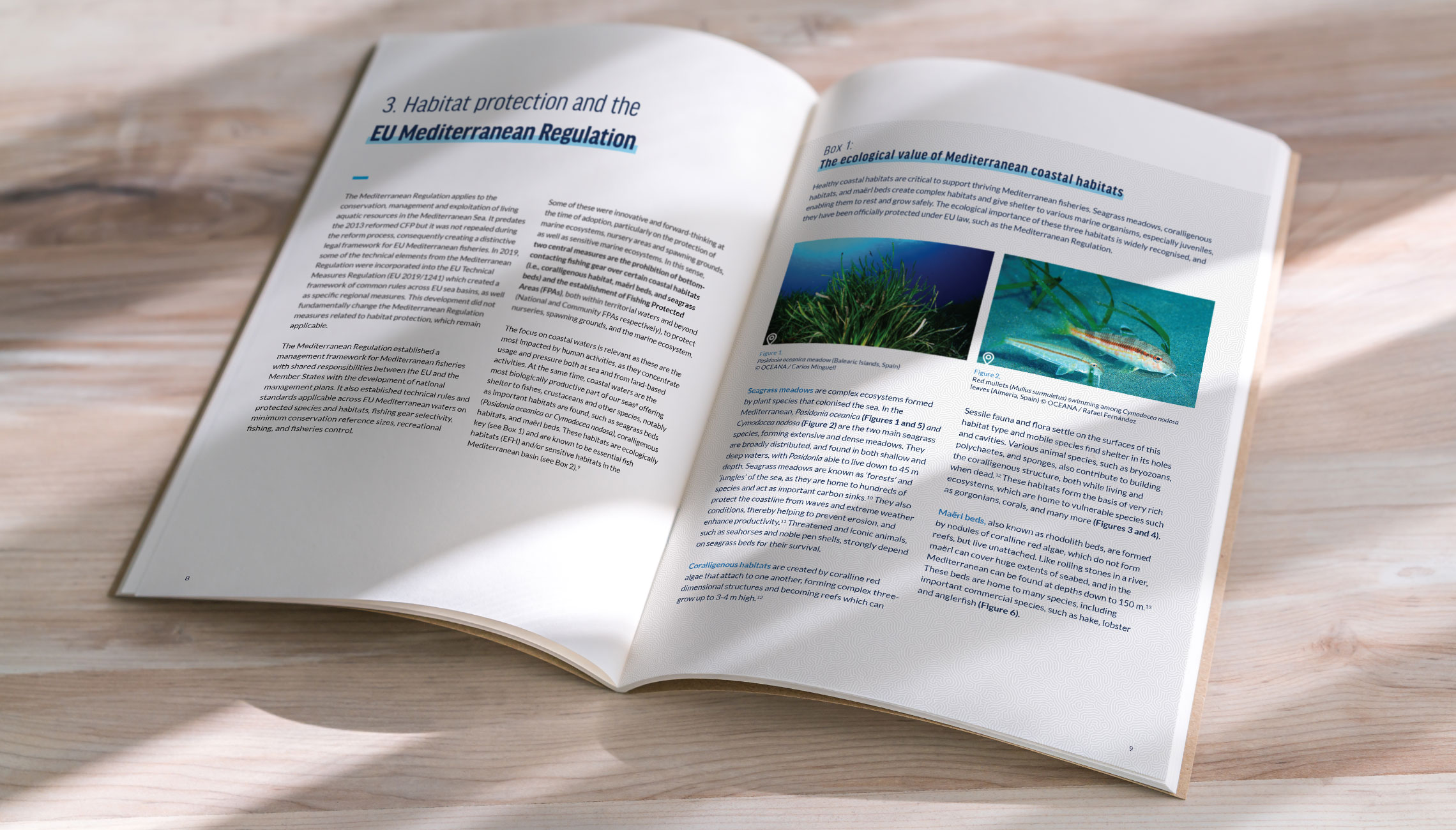 publication: Publications on marine reserves and the Mediterranean Sea Regulation - image 3